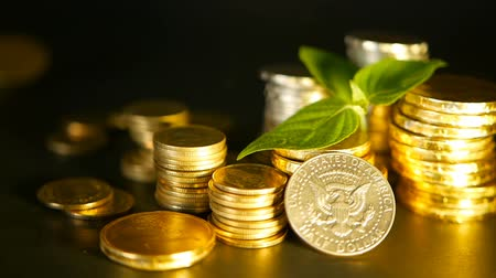 currency trading : Golden coins and green leaf of sprout on black background. Success of finance business, mortgage and real estate investment, retirement, saving plan for loan, deposit, wealth, banking concepts.