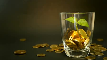 экономить : Management efficiency. Golden coins in glass and green leaf of sprout on black background. Success of finance business, investment, financial ideas. Rotating, twisting, swirling, spinning penny. Стоковые видеозаписи