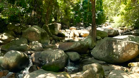 стремнина : Magical scenery of rainforest and river with rocks. Wild vegetation, deep tropical forest. Jungle with trees over fast rocky stream with rapids. Steam with stone cascades flows through exotic woods. Стоковые видеозаписи