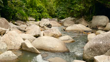 musgo : Magical scenery of rainforest and river with rocks. Wild vegetation, deep tropical forest. Jungle with trees over fast rocky stream with rapids. Steam with stone cascades flows through exotic woods. Vídeos