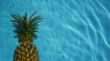 ananás : Pineapple Floating In blue Water In Swimming Pool. Healthy Raw Organic Food. Juicy Fruit. Vegetarian, Vegan Nutrition, Vitamins, Diet, summer holidays, vacation concepts. Exotic tropical background Vídeos