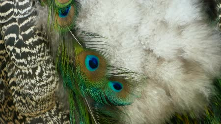 шлейф : Elegant wild exotic bird with colorful artistic feathers. Close up of peacock textured plumage. Flying Indian green peafowl (Pavo cristatus) in real nature, vibrant pattern of luminous tail and wings.