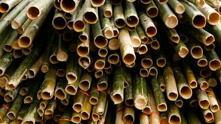 sawn : Round cross sliced bamboo trunk bundles in stack prepared for use as a building construction material in asia. Natural texture. Pile of cutted trees. Deforestation concept. decor and furniture source.