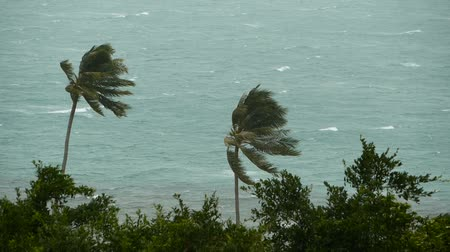 sways : Seaside landscape during natural disaster hurricane. Strong cyclone wind sways coconut palm trees. Heavy tropical rain storm, power of nature, climate change, typhoon on ocean shore during wet season.