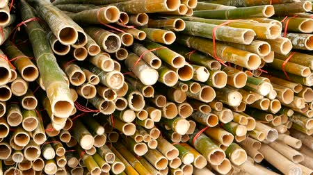 lumber : Round cross sliced bamboo trunk bundles in stack prepared for use as a building construction material in asia. Natural texture. Pile of cutted trees. Deforestation concept. decor and furniture source.