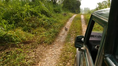 jaszczurka : Car driving on remote road in forest of Chitwan National Safari Park in Nepal. Monitor lizards are large lizards in the genus Varanus. Wideo
