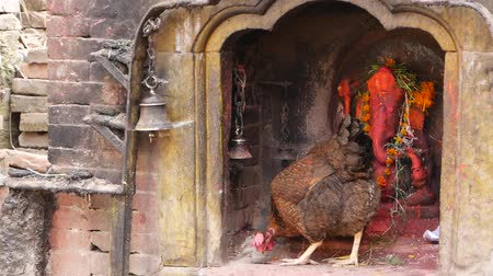patan : Shrine with sculpture and candles burning. Hindu temple shrine outdoors with sculpture of Ganesha and burning candles in sunlight, Nepal, chicken or rooster bird inside pecks grain