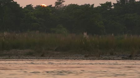 linha de costa : Sunset on tranquil river in summer. Sun reflecting on calm water with green shore. Chitwan National Safari Park in Nepal. Terai - home for Bengal tiger, crocodiles, Indian rhinoceros, elephants Vídeos