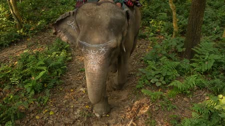 terai : CHITWAN NATIONAL PARK, NEPAL Tourists having trekking tour. Elephant walking in forest during safari observing rhinoceros, sunlight in majestic tropical jungle