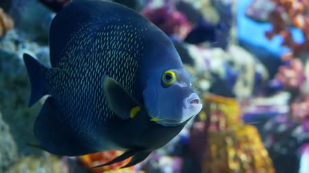 armoni : School of fish of various species swimming in clean blue water of large aquarium. Marine underwater tropical exotic life natural background.