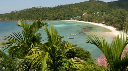 magnífico : Boats near shore of island. Traditional colorful fishing vessels floating on calm blue water near white sand coast of tropical exotic paradise island. View through green palm leaves. Koh Phangan.