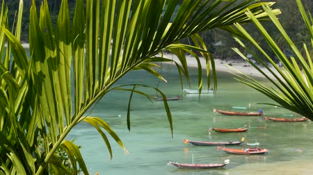 picturesque view : Boats near shore of island. Traditional colorful fishing vessels floating on calm blue water near white sand coast of tropical exotic paradise island. View through green palm leaves. Koh Phangan.