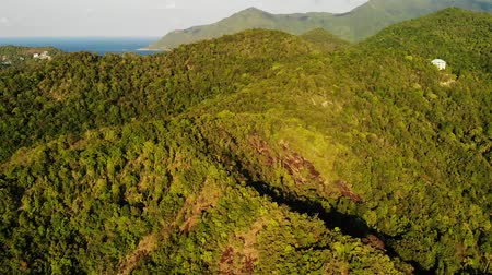 idílico : Tropical forest on island. Fantastic drone view of green jungle on mountain ridge of amazing tropical island. Blue sea. Exotic paradise panorama of rainforest