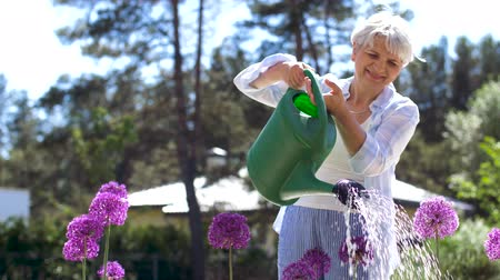 locsolás : senior woman watering flowers at summer garden