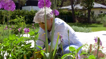 садовник : senior woman planting flowers at summer garden