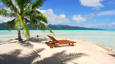 chaise longue : tropical beach with palm tree and sunbeds Stock Footage