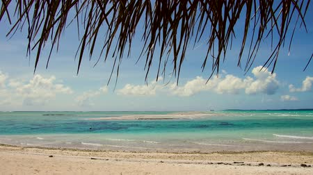 oceano pacífico : lagoon at tropical beach in french polynesia Stock Footage