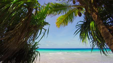 tropical fruit : tropical beach with cocopalms in french polynesia