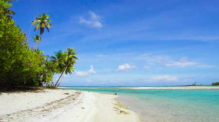 Полинезия : tropical beach with palm trees in french polynesia Стоковые видеозаписи