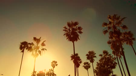 Венеция : palm trees over sun at venice beach, california