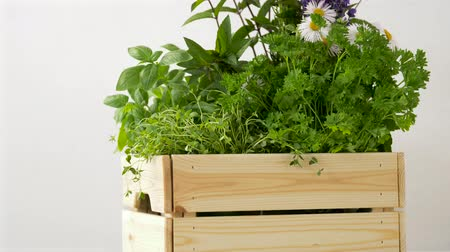 camomila : green herbs or spices in wooden box on table