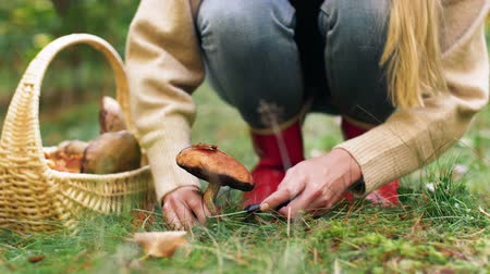 borowik : young woman picking mushrooms in autumn forest Wideo