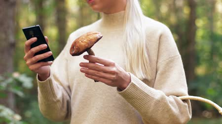 grzyb : woman with mushroom and smartphone in forest