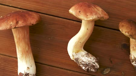 boletus edulis : boletus edulis mushrooms on wooden background Stock Footage