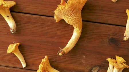 mycology : chanterelles on wooden background Stock Footage