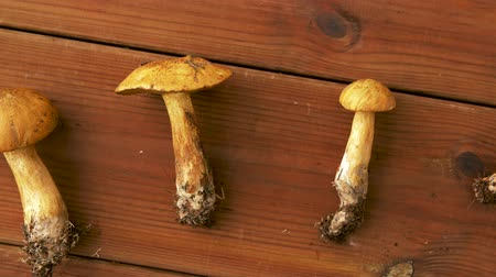 borowik : xerocomus mushrooms on wooden background