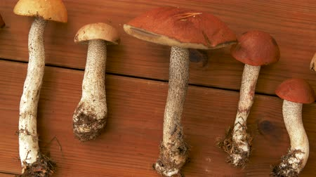 mycology : brown cap boletus mushrooms on wooden background