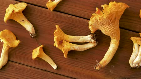 грибок : chanterelles on wooden background Стоковые видеозаписи