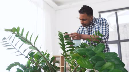 sprayer : indian man cleaning houseplant at home Stock Footage