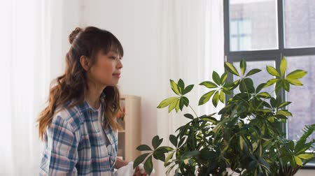 utírat : happy asian woman cleaning houseplant at home