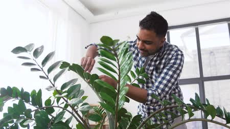 püskürtücü : indian man cleaning houseplant at home Stok Video