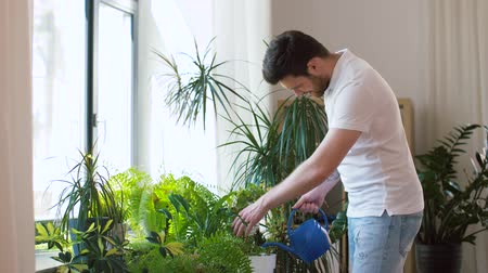 houseplant : man watering houseplants at home Stock Footage