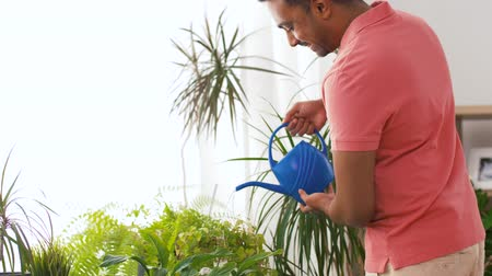 houseplant : indian man watering houseplants at home