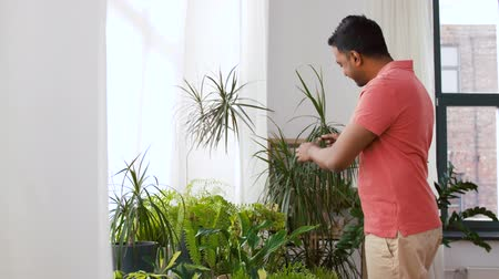 botanik : indian man taking care of houseplants at home