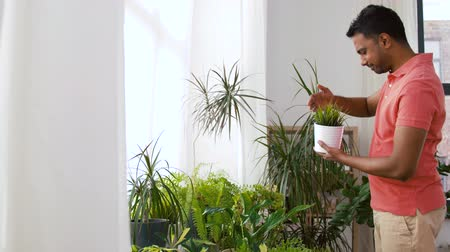 trabalhos domésticos : indian man taking care of houseplants at home