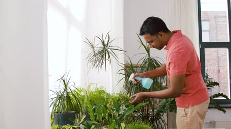 püskürtücü : indian man spraying houseplant with water at home