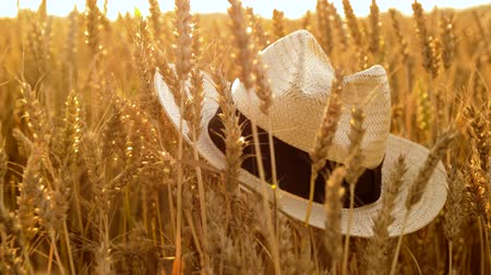 economia rural : straw hat on cereal field of ripe wheat