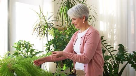 sprzątanie : senior woman takes care of houseplant at home Wideo