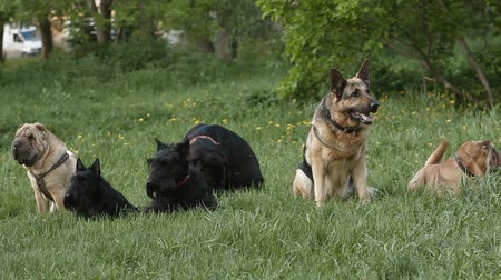 small group of animals : group of dogs in the park