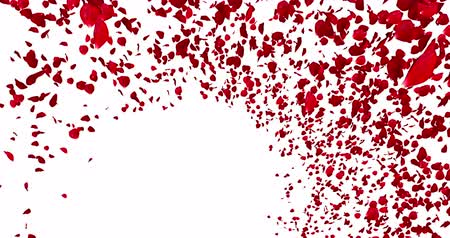 valentin nap : 3d animation red rose petals flying with vortex on white background, love and valentine day concept