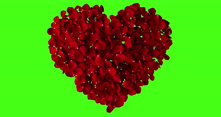 chroma key background : red heart of rose petals flying with vortex on chroma key, green screen background, love and valentine day concept
