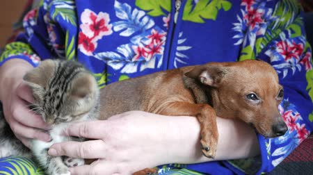 kočička : Cat and dog in arms
