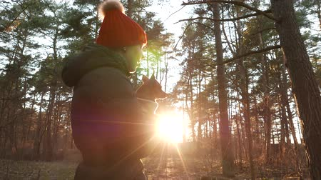 rescue dog : Woman playing with her dog at sunset in forest Stock Footage
