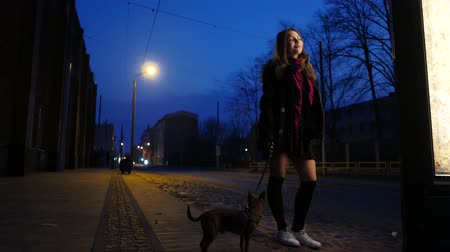 pincher : Teen girl with a little dog on a night street enjoy warm weather of early spring.