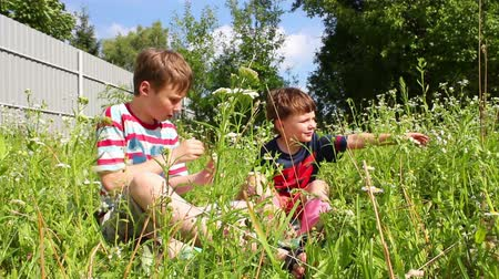 пикник : children playing in grass Стоковые видеозаписи