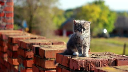 prowl : Cat on a fence